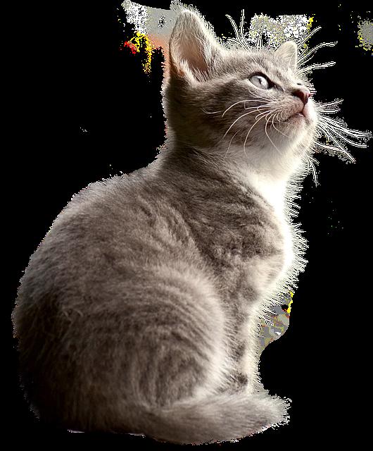 cat-2973098_640